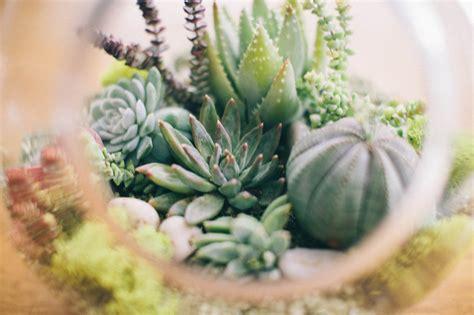 The Parker Project: DIY Succulent Terrarium