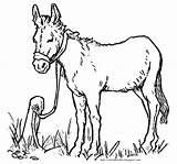 Donkey Coloring Jesus Tied Easter Colt Bible Young Coming Sat Found sketch template
