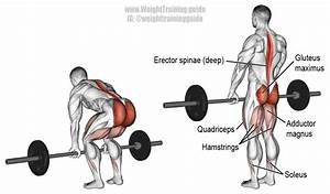 Barbell Deadlift Exercise Instructions And Video