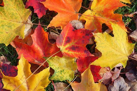 fall foliage daniel  marquis photography daniel