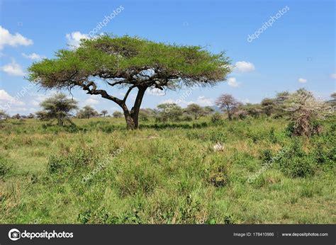 Serengeti National Park Scenery Tanzania Africa — Stock
