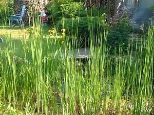 Bambus Als Sichtschutz Im Kübel : bambus als gr ner sichtschutz der gartenratgeber ~ Frokenaadalensverden.com Haus und Dekorationen