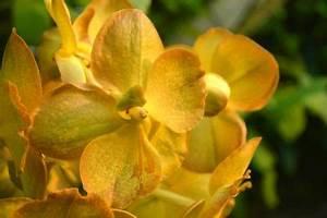 Orchidee Vanda Pflege : vanda orchidee zum bl hen bringen so klappt 39 s ~ Lizthompson.info Haus und Dekorationen
