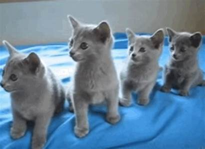 Kittens Synchronization Perfect Ms