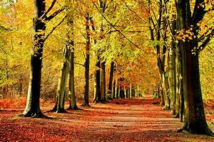 autumn, , fall, , landscape, , nature, , tree, , forest, , leaf, , leaves, , fence, , path, , trail, , road, wallpapers