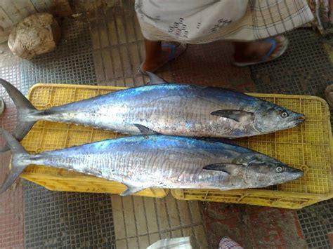 fish sea arab aquatic