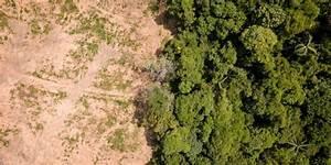 10 Caracter U00edsticas De La Deforestaci U00f3n