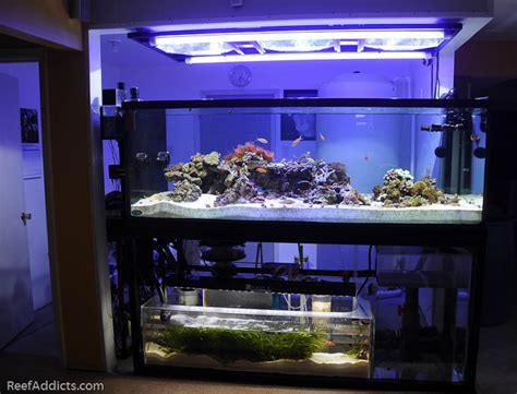 refugium led grow lights reef addicts product review unique led lighting 39 s
