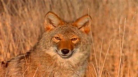 Wildlife of Missouri YouTube