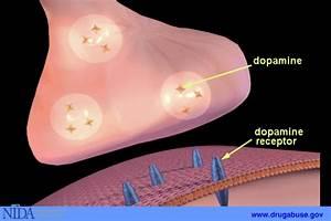 6: Neurotransmission | National Institute on Drug Abuse (NIDA)