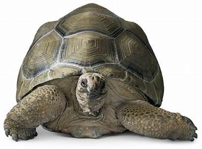 Reptiles Animals Types Reptile Dk Facts Tortoise