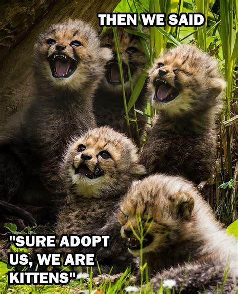 Funniest Animal Memes - my funny animal memes the real sasha