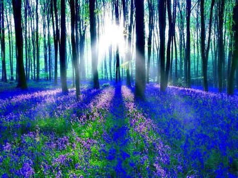 Blue Magical Wallpaper Hd by Bluebell Wood Hd Desktop Wallpaper Widescreen High