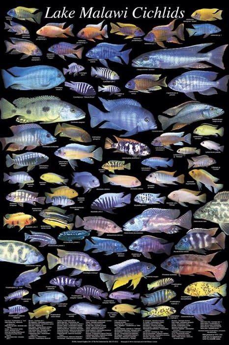 pet fish eat  rocks   bottom