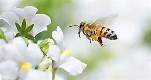 Pflanzenlexikon Mit Bild : mai gr nis gartenkinder ~ Orissabook.com Haus und Dekorationen