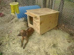 looking for cheap dog house ideas With cheap dog house ideas