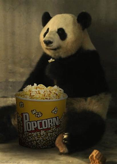 Popcorn Panda Amazing Seen Eating Things Funny