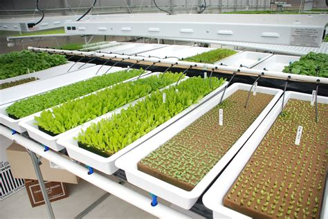 Hydroponic Gardening by Rimol Greenhouse Systems Works With American Hydroponics