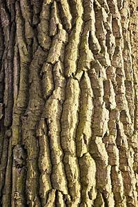 Tree bark texture in vertical composition