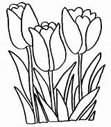 Coloring Tulip Pages Print sketch template