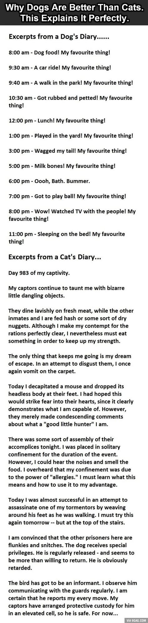 than better cats dogs why funny quotes cat true jokes dog joke 9gag quote stories humor diary story sayings