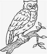 Owl Coloring Owls Colouring Visiting Forget Dont Subscribe Thanks Another sketch template