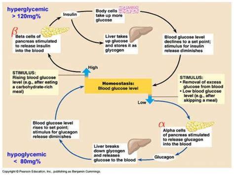 seminar blood glucose regulation