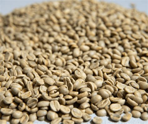 Light roasts and dark roasts are two ends of the coffee spectrum and there's a huge difference in the aroma and flavor. The Best Light Roast Coffee of 2021 - The Coffee Resource