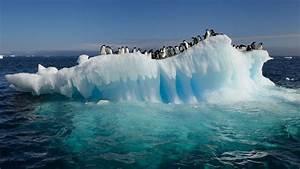 Pingouin Sur La Banquise : pinguoins ~ Melissatoandfro.com Idées de Décoration