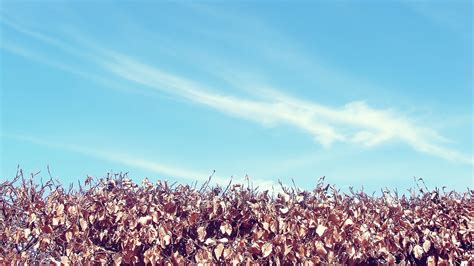 autumn sky desktop pc  mac wallpaper
