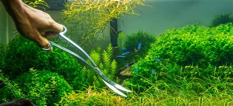 Aquascaping Tips by Fluval Aquascaping Tips 101