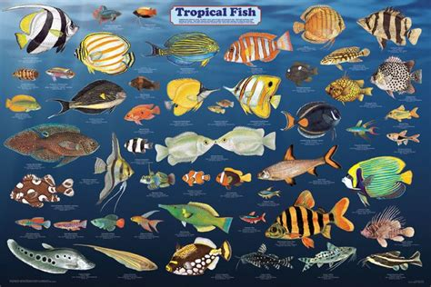 googlecom list of free catalogues regarding art and paintings for home tropical fish poster sea posters pictures prints decor stuff southwest florida