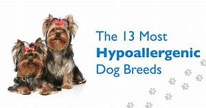 hypoallergenic or low dander dog breeds are most monly