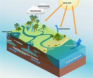 The Water Cycle In Florida