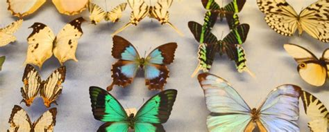 la maison des papillons 224 tropez les lieux incontournables 224 tropez tropez