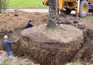 Großen Apfelbaum Kaufen : wie werden grosse b ume mit einem nat rlichen trick ~ Lizthompson.info Haus und Dekorationen