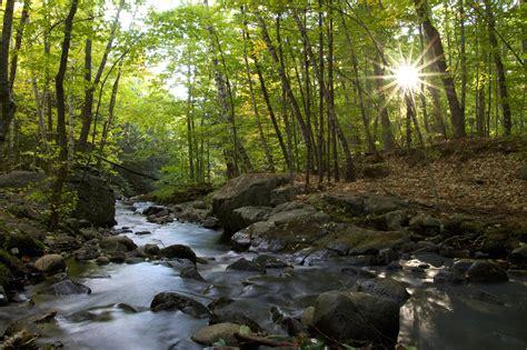 imagen gratis rio bosque sol naturaleza paisaje