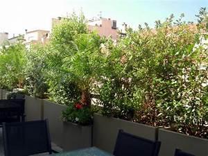Plantes à Suspendre : plante brise vue terrasse ~ Premium-room.com Idées de Décoration