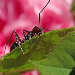 Ameisen im rasen blumentopf auf der terrasse bekampfen for Ameisen terrasse
