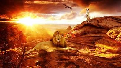 Africa Lion African Wallpapers Desert Animal Bing