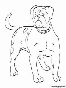 American Bulldog coloring page   Coloring pages