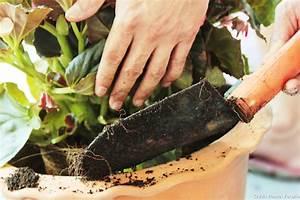 Comment Attraper Une Taupe : comment se d barrasser d une taupe dans le jardin ~ Dailycaller-alerts.com Idées de Décoration