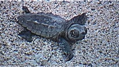 Turtles Sea