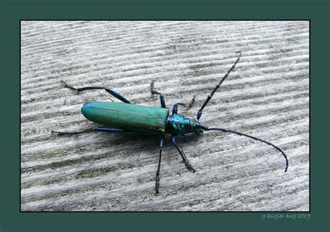 gruener kaefer foto bild tiere wildlife insekten