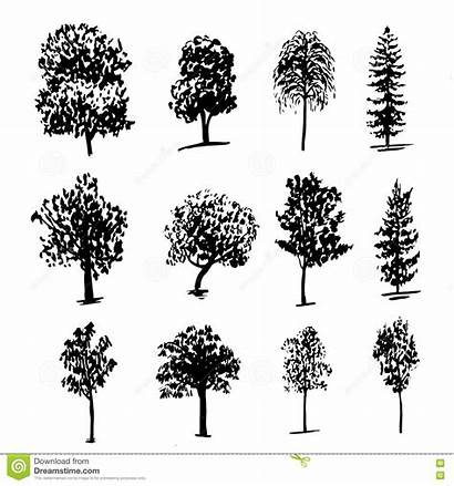 Types Trees Drawing Ink Sketch Illustration Different