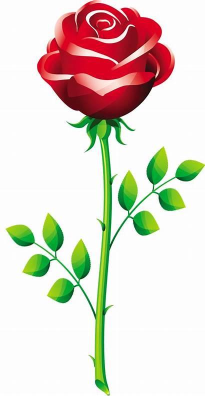 Rose Vector Flower Roses Flowers Clip Clipart