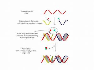 Nucleic Acid Templated Chemistry