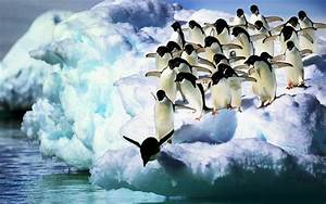 Penguin Wallpapers HD Pictures