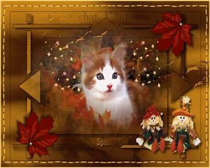 Autumn Automne Kitty Gifs Est Chat Centerblog