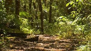 South American Tropical Rainforest Plants